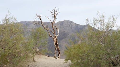 Baum auf der Wüste