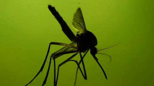 Testing a Mosquito