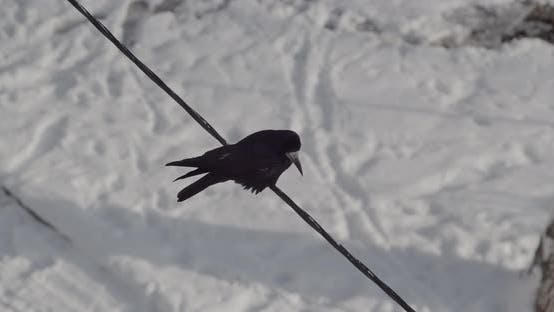 Crow Birds Sit On A Winter Wire