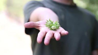 Hazelnuts Held in Human Hand