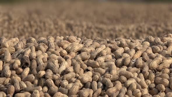 Thumbnail for Geschälte Erdnuss-Haufen