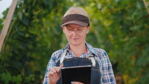 Cover Image for Woman Farmer Uses a Tablet Against the Background of a Well Maintained Vineyard