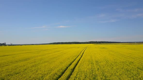 Thumbnail for Rapeseed Fields Aerial 5