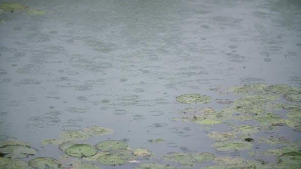Thumbnail for Raining Rain on Water Surface