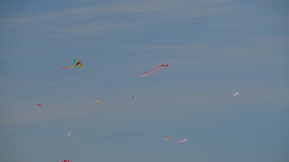 A flying flock of multicolor kites