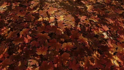 Maple Leaves Fall 03 4K