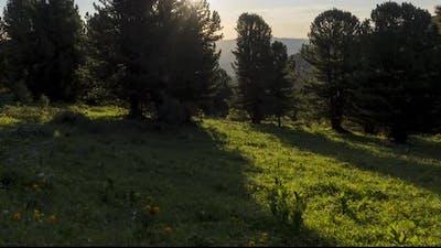 Mountain Meadow Timelapse