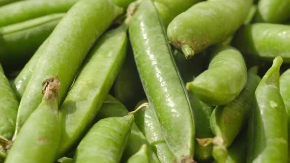 Raw Green Pea Pod Rotates