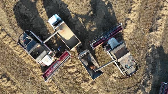Cover Image for Aerial Panorama of Two Combine Harvesters Fill the Truck Body with Grain