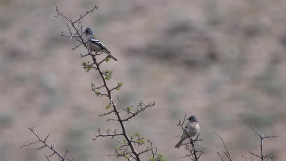 Thumbnail for Birds in A Tree at Cèdre Gouraud Forest