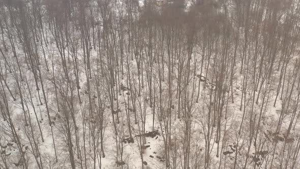 Thumbnail for Winter scenery in the woods 4K aerial video