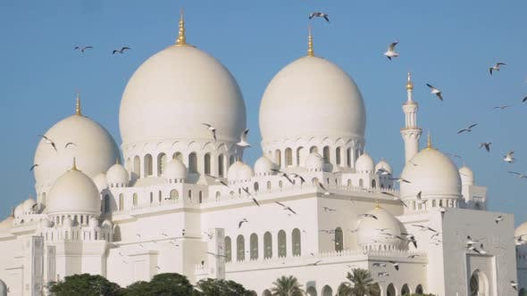 Slow motion Birds In font of Sheikh Zayed Grand Mosque Abu Dhabi