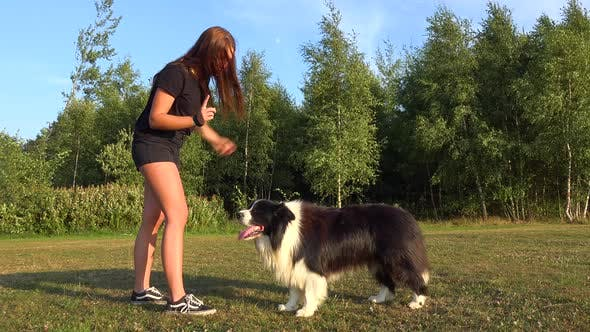 Cover Image for A Young Woman Reprimands Her Border Collie in a Meadow in a Forest