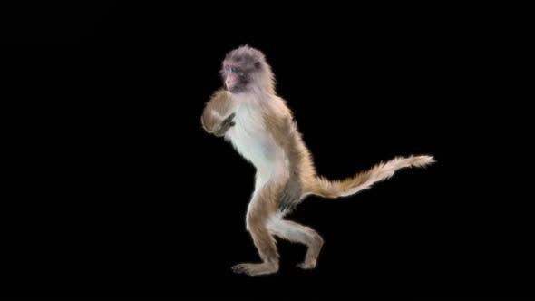 Thumbnail for Monkey Dance HD