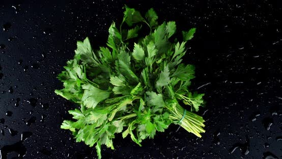 Bunches of Fresh Parsley Slowly Rotate.