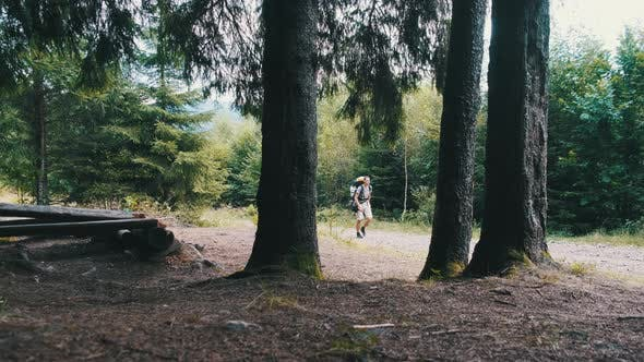 Tourist with a Backpack Climbs the Mountains Along the Path in the Forest