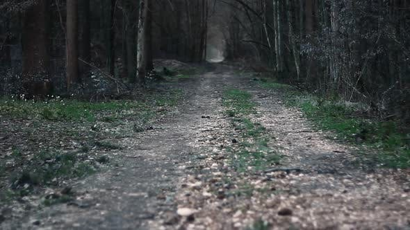 Cover Image for Dangerous Forest and a Path Leading There