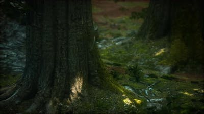 Tree Roots and Sunshine in a Green Forest with Moss