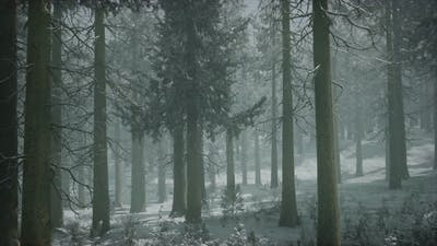 Winter Snowcovered Forest on a Cloudy Day