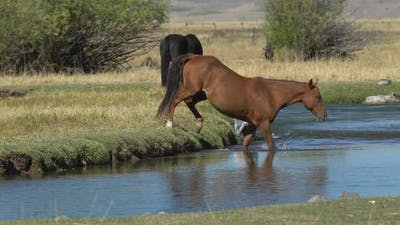 A horse walking into the river