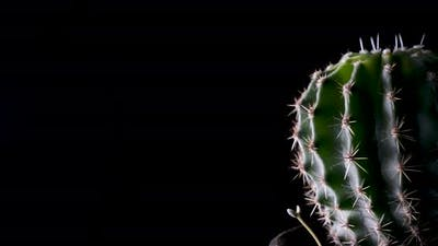Round cactus on black background