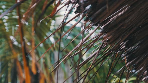 Tropical Rain in Africa Drops of Water Drip From Thatched Roofs of Bungalows
