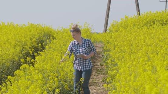 Farmer Examining Oil Seed Canola Field