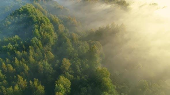 Thumbnail for Sunrise Forest Aerial