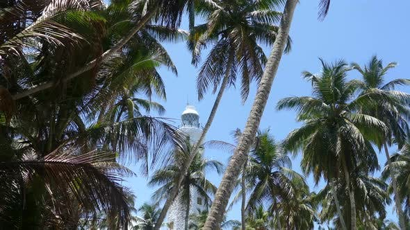 Cover Image for Dondra Head Lighthouse Behind the Palmtrees