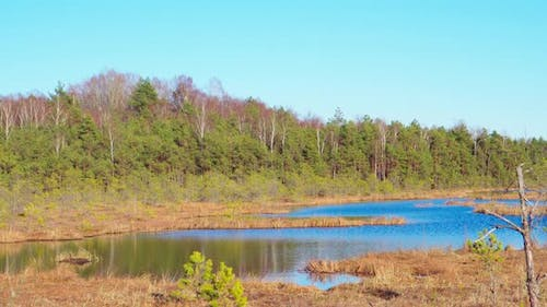 Forest lake, swamp in spring