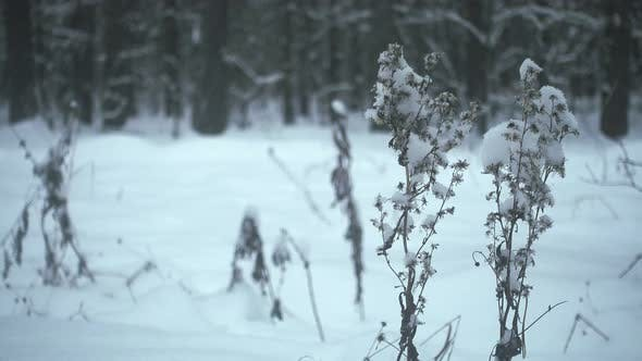 Thumbnail for Winter in Forest, Snowfall