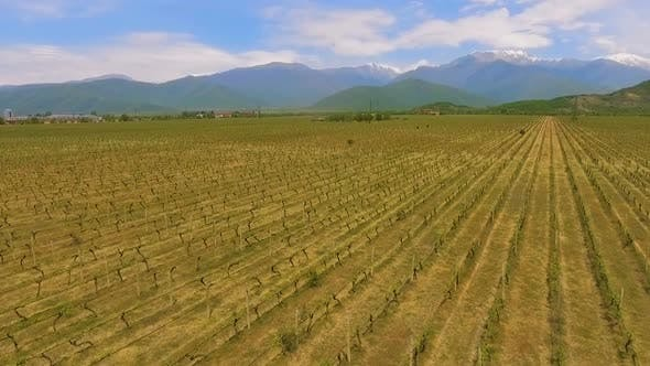 Thumbnail for Alazani Valley in Georgia, Wine Business and Export, Grape Variety, Aerial View