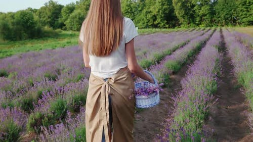 Unrecognizable Woman Walking with Basket Lavender Field