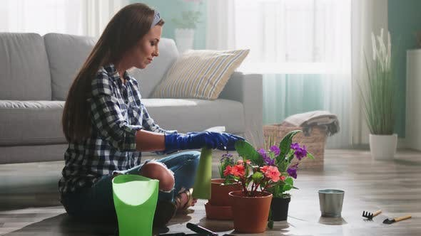 Woman Is Spraying Water On Flowers