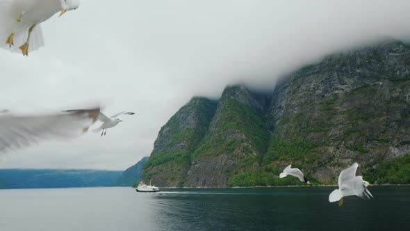Thumbnail for Cruise Along the Picturesque Fjord in Norway
