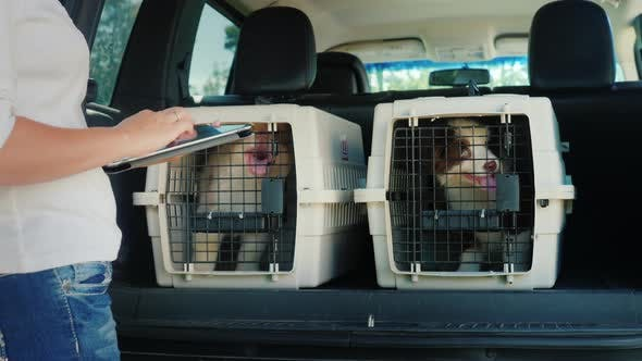 Cover Image for A Woman Uses a Tablet, Stands at the Trunk of a Car Where There Are Cells with Puppies