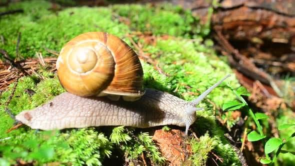 Thumbnail for Snail 5