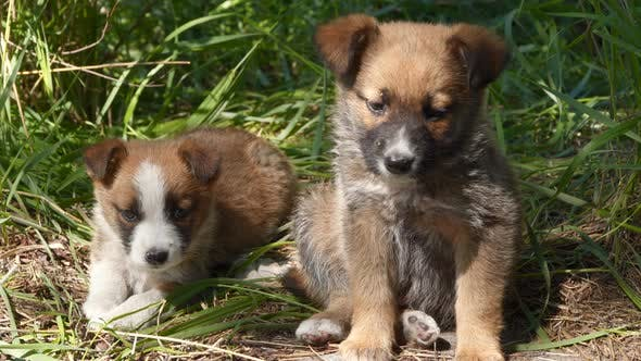 Two Homeless Puppy Sitting on the Ground