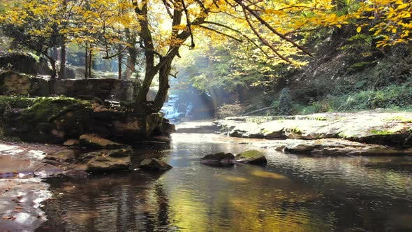 Dry Tree Leaves on Stream in Autumn Forest