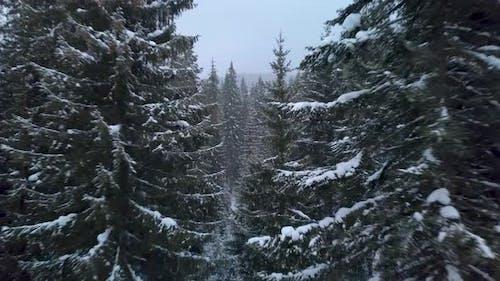 Fliegen durch den Winterwald