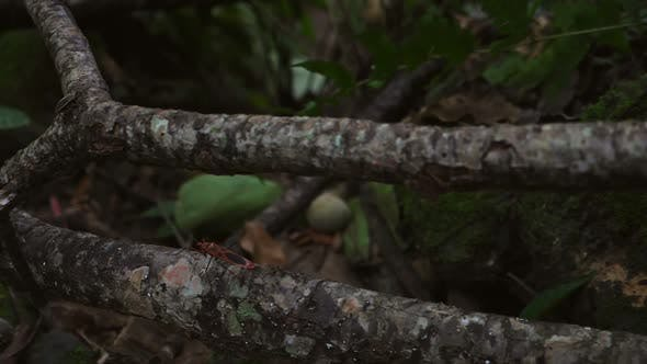 Insect In Forest