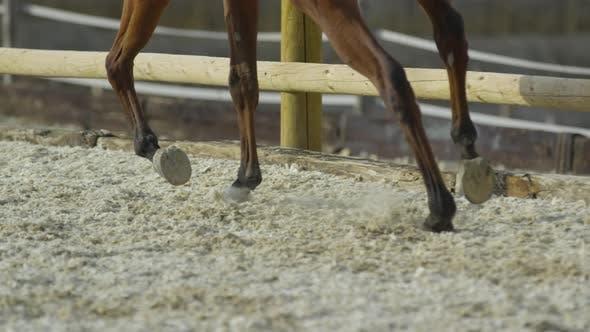 Thumbnail for Legs of horses running