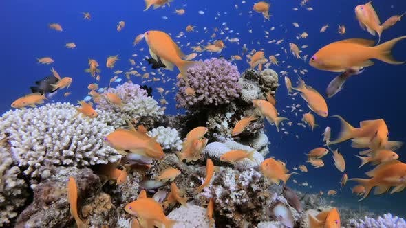 Thumbnail for Underwater Tropical Colorful Fish