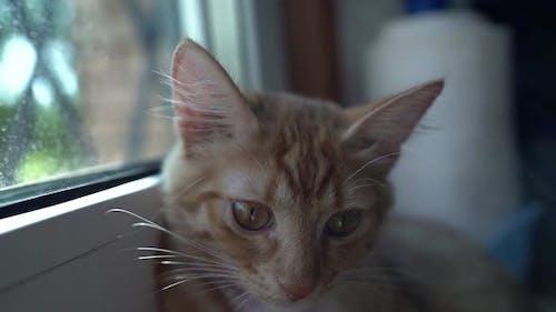 Ruhige rote Katze entspannt sich auf der Fensterbank, Porträt von Maulkorb, süßes Haustier, Katzentherapie