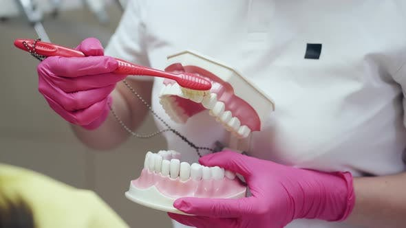 Thumbnail for A Dentist Is Holding a Ceramic Model of Teeth and a Brush
