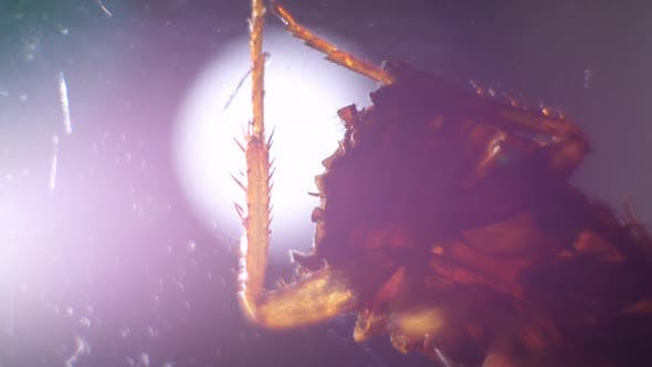 Thumbnail for Legs of an Insect