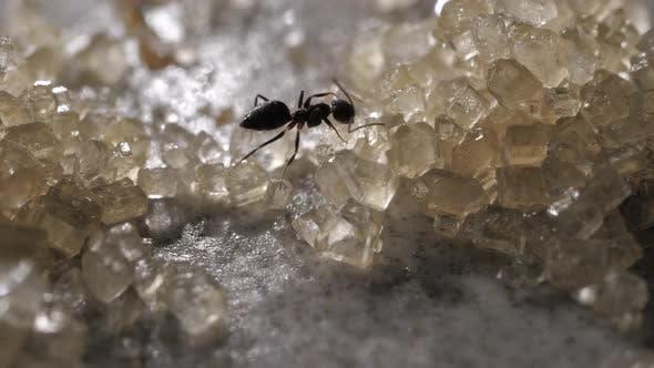 Ant and Sugar