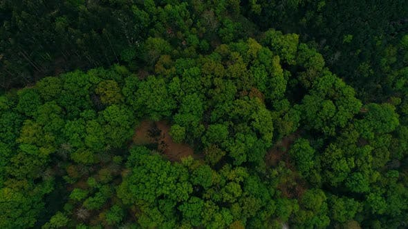 Thumbnail for Aerial Flying Over Above Forest in the Valley