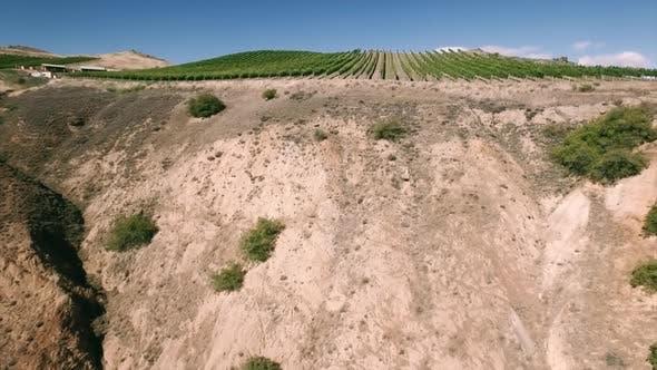 Thumbnail for Vineyard on hill