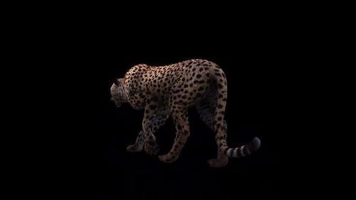 Cheetah Back Side View Loop Walk